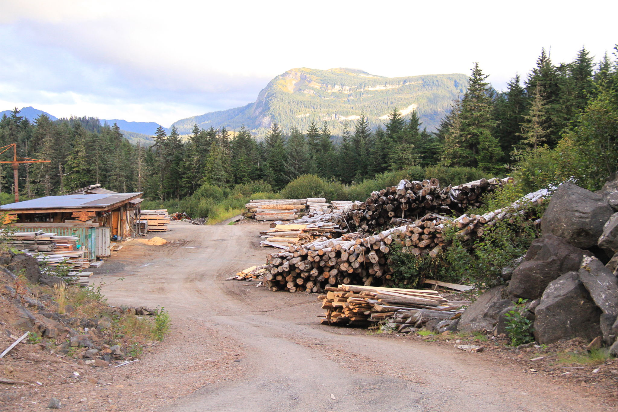 The log yard at Icy Straits Lumber, near Hoonah, Alaska, on North Chichagof Island. The mill's owner, Wes Tyler, experiments with just about any wood he can get his hands on, including young growth, but he still relies mostly on old-growth timber.