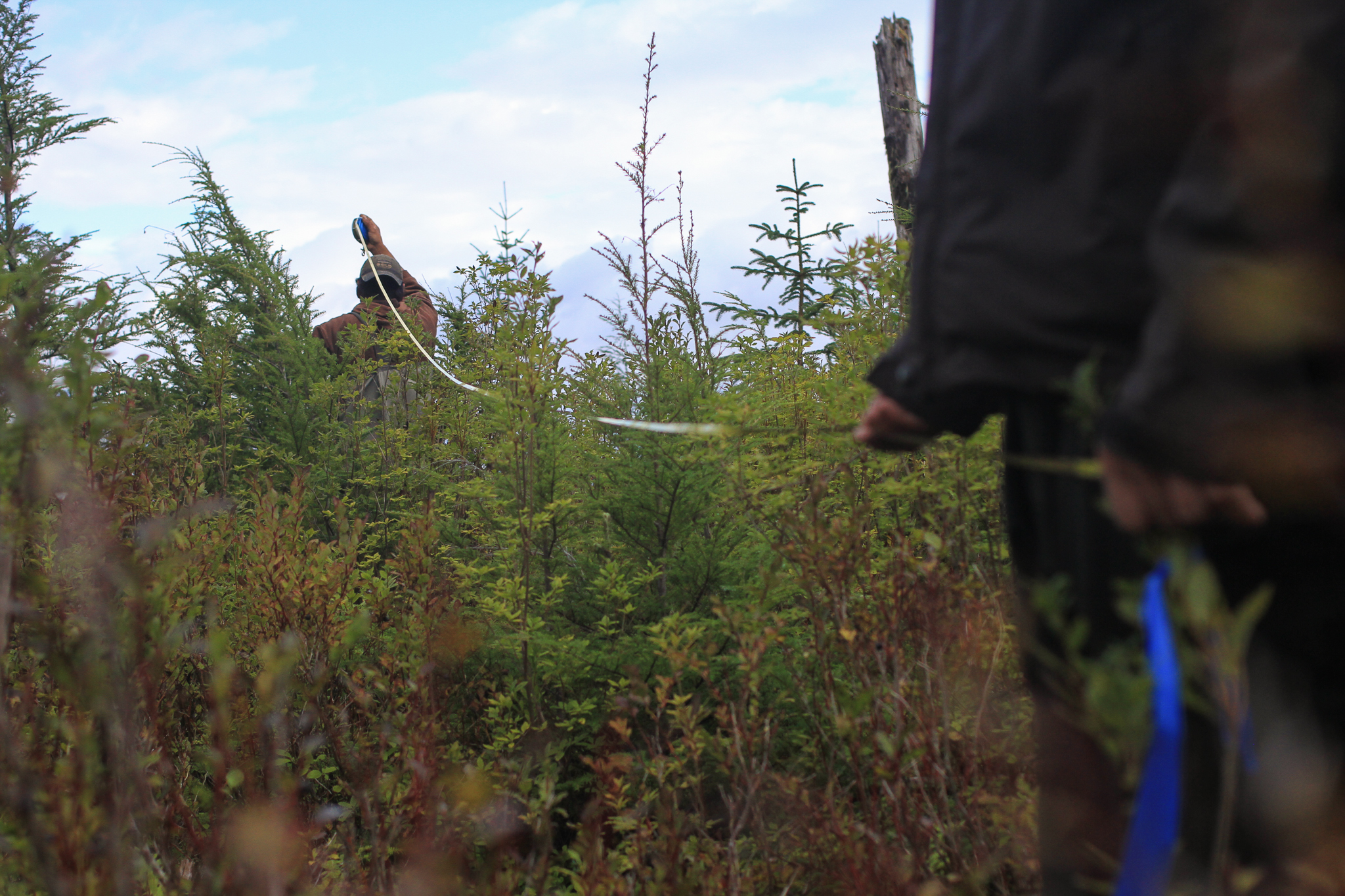 Phillip Sharclane and Donovan Smith use a tape-measure and flagging tape to stake out their survey plot.