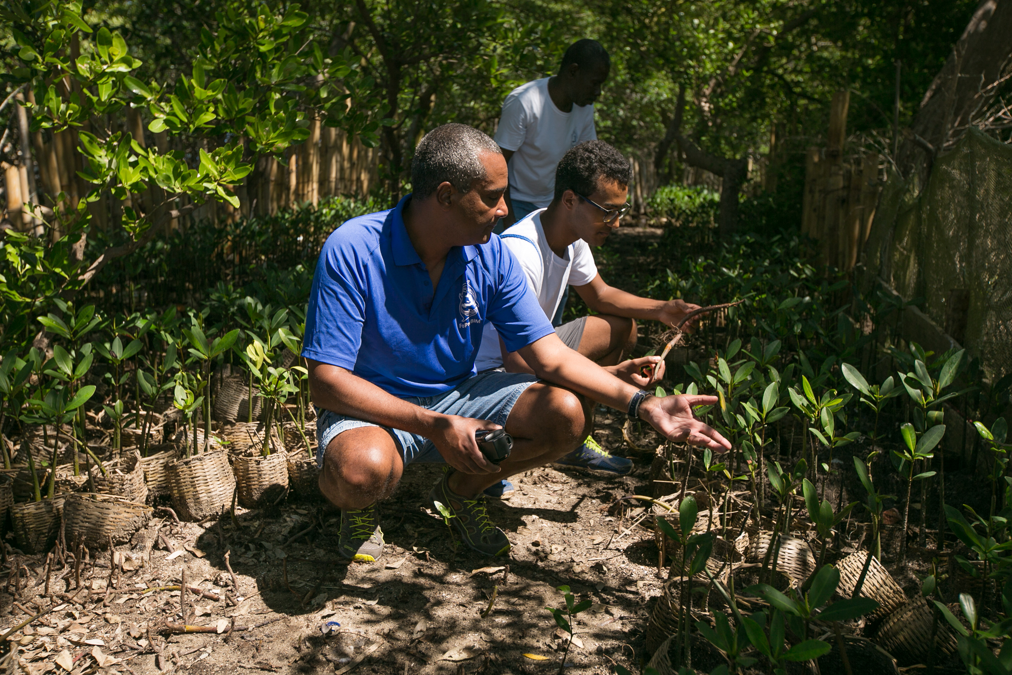 Wiener's mangrove project has now firmly taken root—seedlings are actively being planted in four different coastal regions. ©2016 Bahare Khodabande.