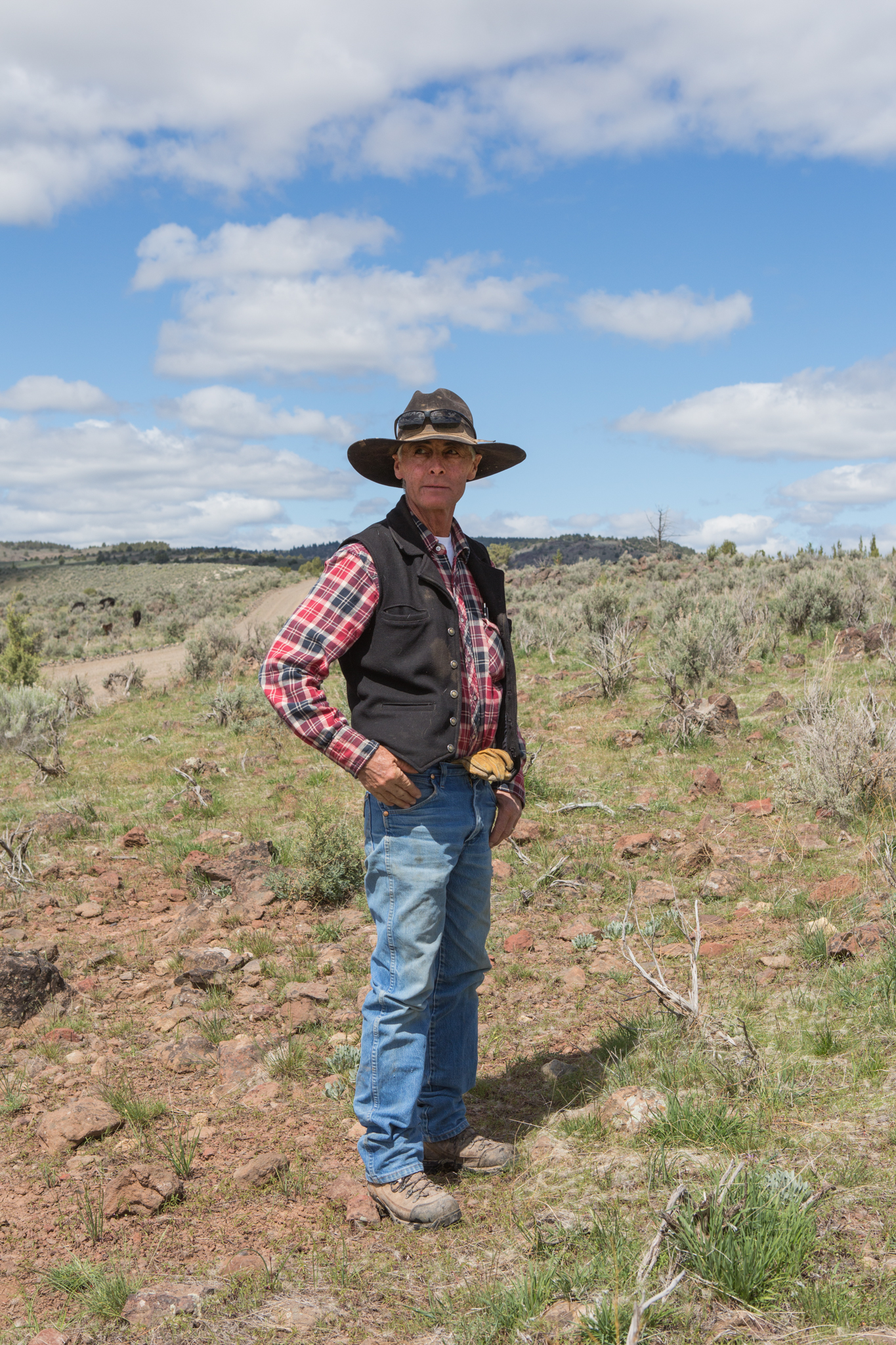 Local rancher Jeff Hussey looks out over the cleared land that is now available to his cattle for grazing. Keeping his acres open for both cattle and sage-grouse requires an ongoing commitment.