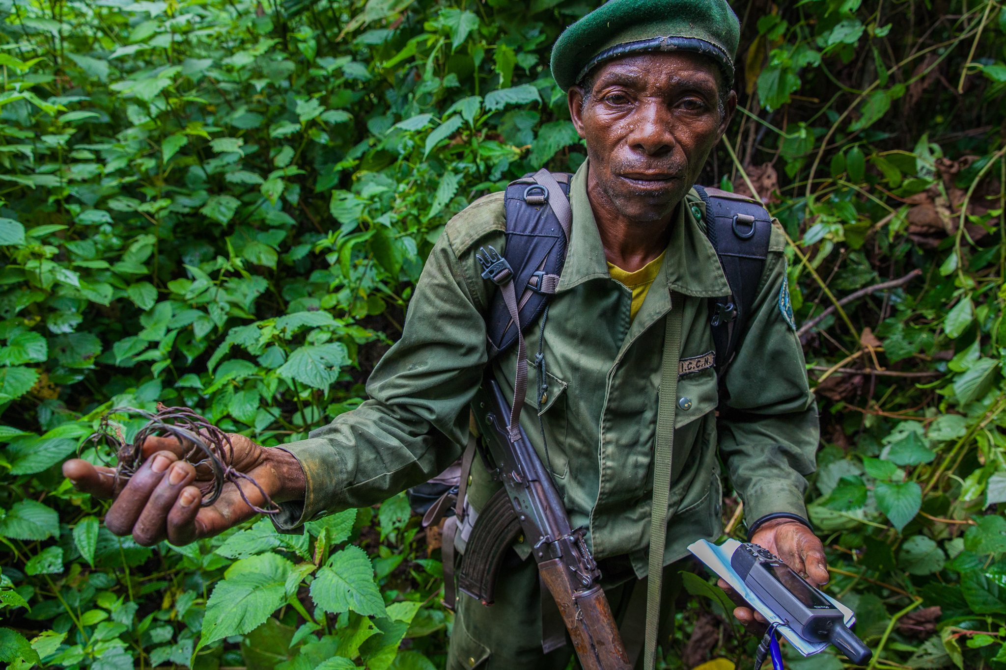 Although snares are used primarily to catch antelopes, bush pigs, and other sources of bush meat, they are indiscriminate killers--trapping leopards and gorillas just as easily as their intended victims. Park rangers look for and collect these lethal instruments on their daily patrols.