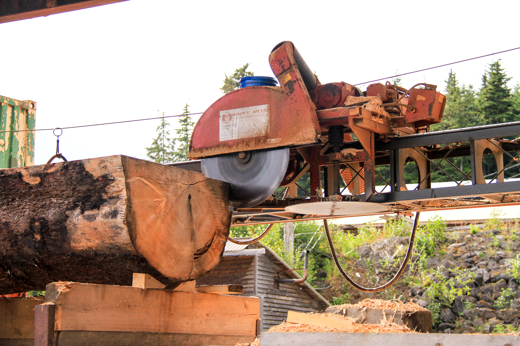 An old growth Sitka spruce log is processed at Icy Straits Lumber in Hoonah, Alaska, on Chichagof Island. The tree was cut for carving a tribal canoe, but contained rot, so the mill is cutting it for other products.