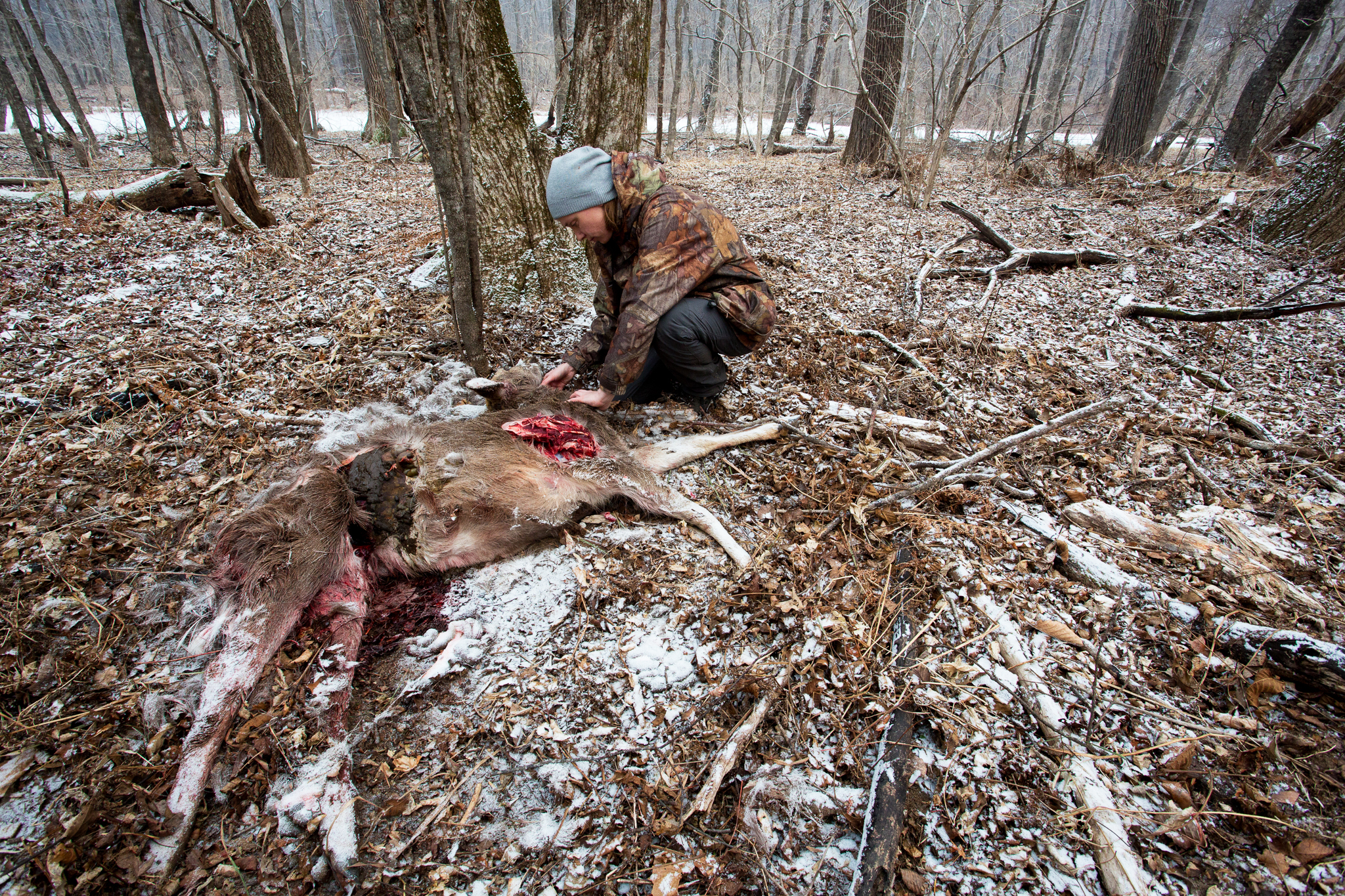 Big cat expert Dina Matyukhina inspects the carcass of a sika deer inside the national park. While Amur leopards frequently prey on both sika and roe deer, dogs belonging to farmers just outside the park borders were the culprits in this case.