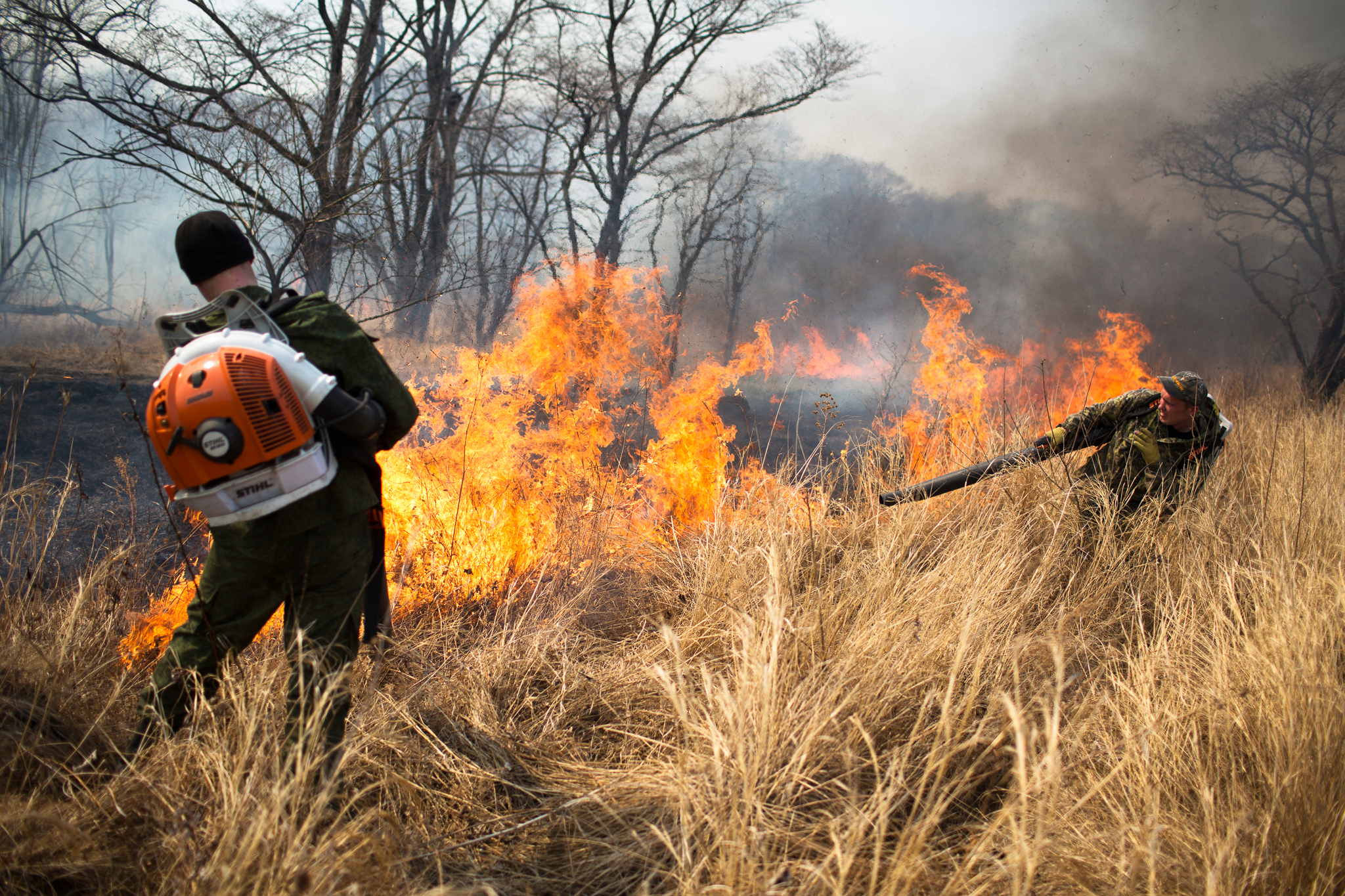 Fire is one of the biggest threats to Amur leopards. Here, park rangers are fighting back with the only tool they have—a leaf blower aimed at the base of the fire.
