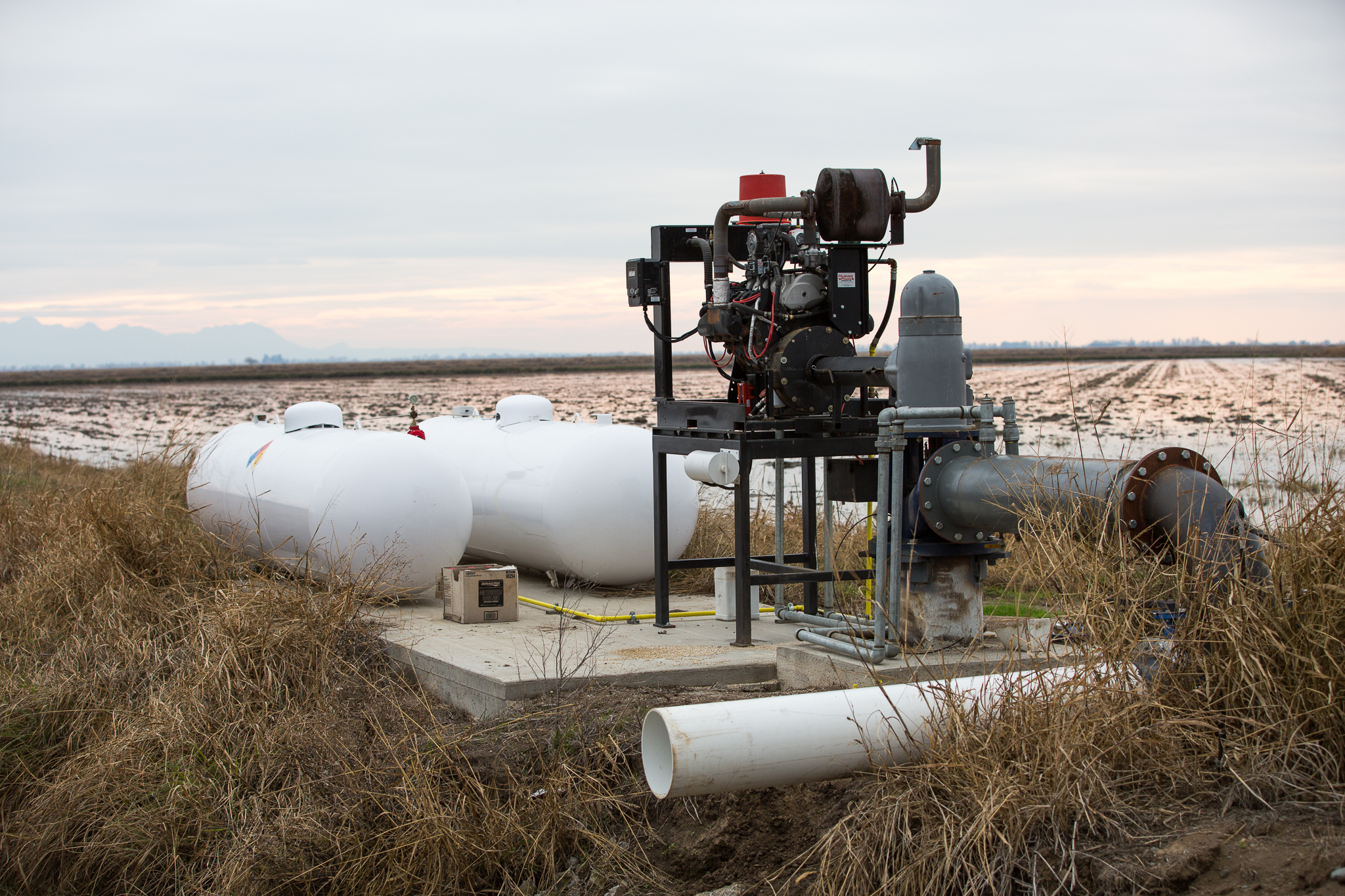 Irrigation pumps like this one pull water from a canal and deliver it onto nearby rice fields. Farmers (and wildlife managers) monitor water levels and adjust according to seasonal needs, including the presence of migratory birds.