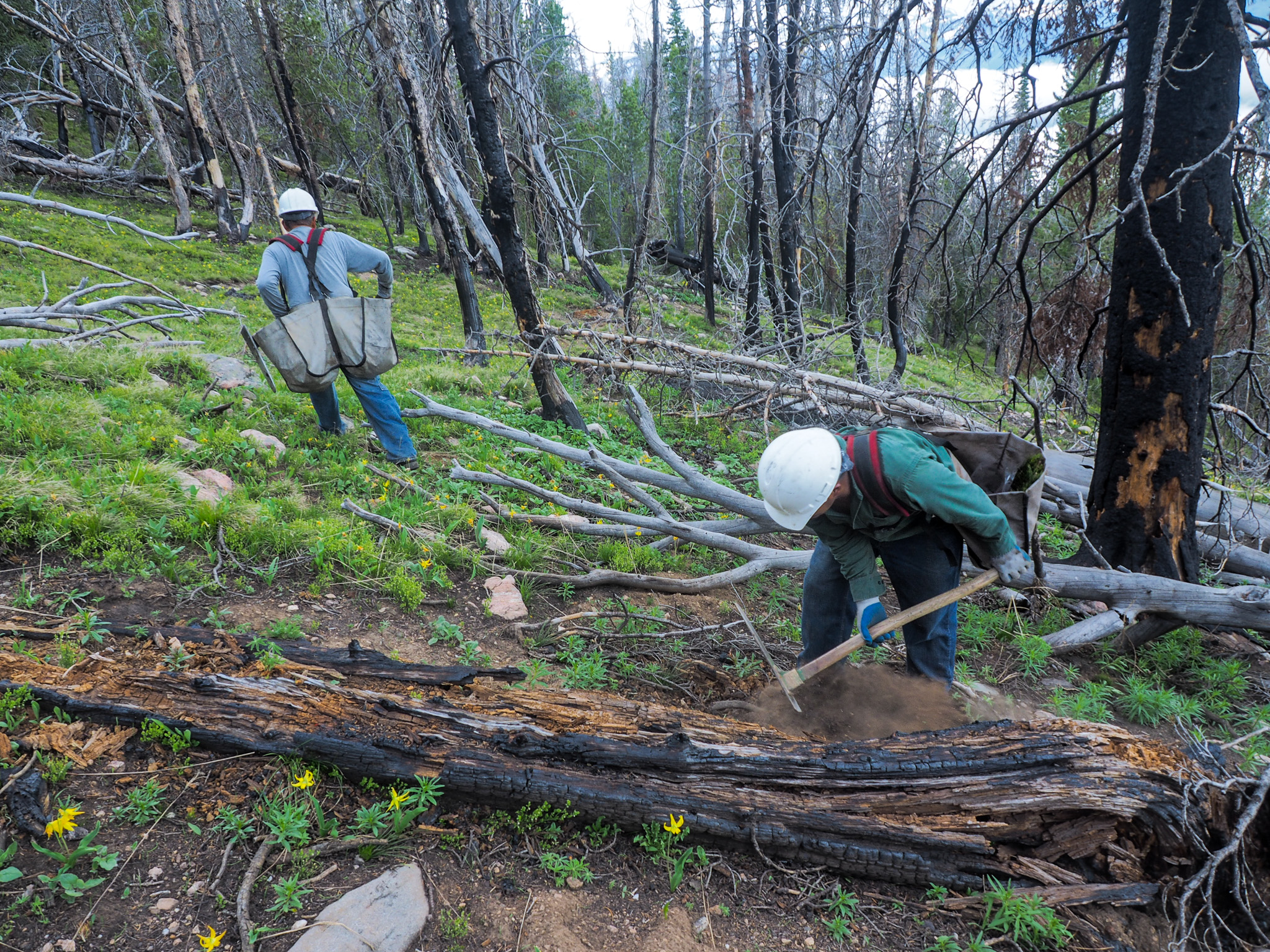 A tree-planting crew works its way up the slope at the site of the recent Millie Fire—Custer-Gallatin National Forest, Montana.