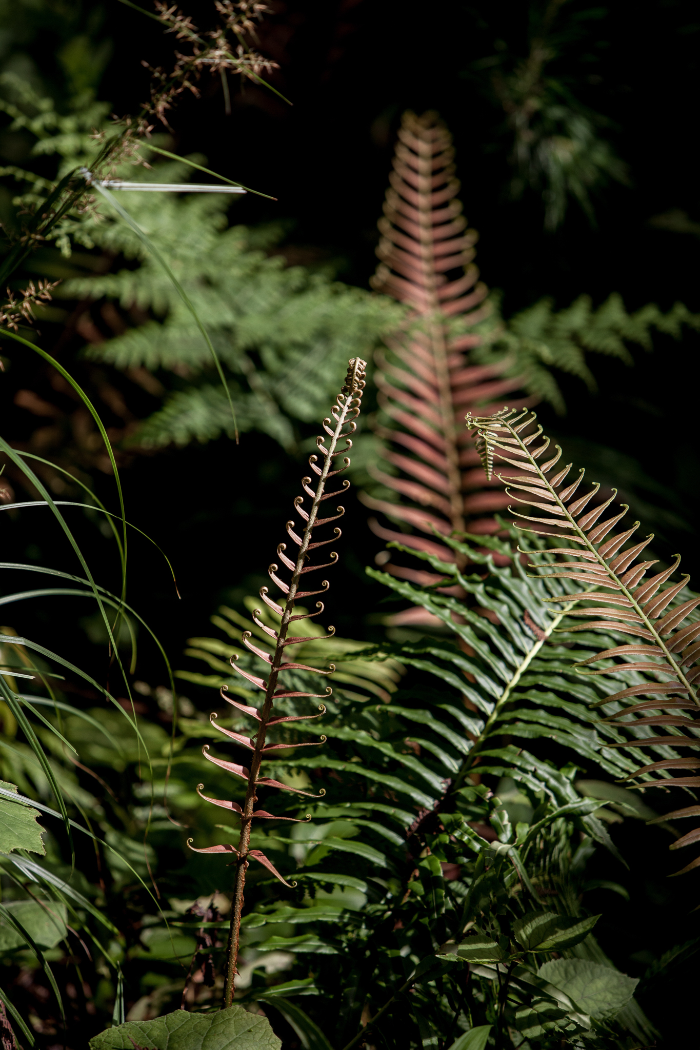Ferns, which are plentiful in Veracruz's cloud forests, are regularly harvested for flower arrangements.