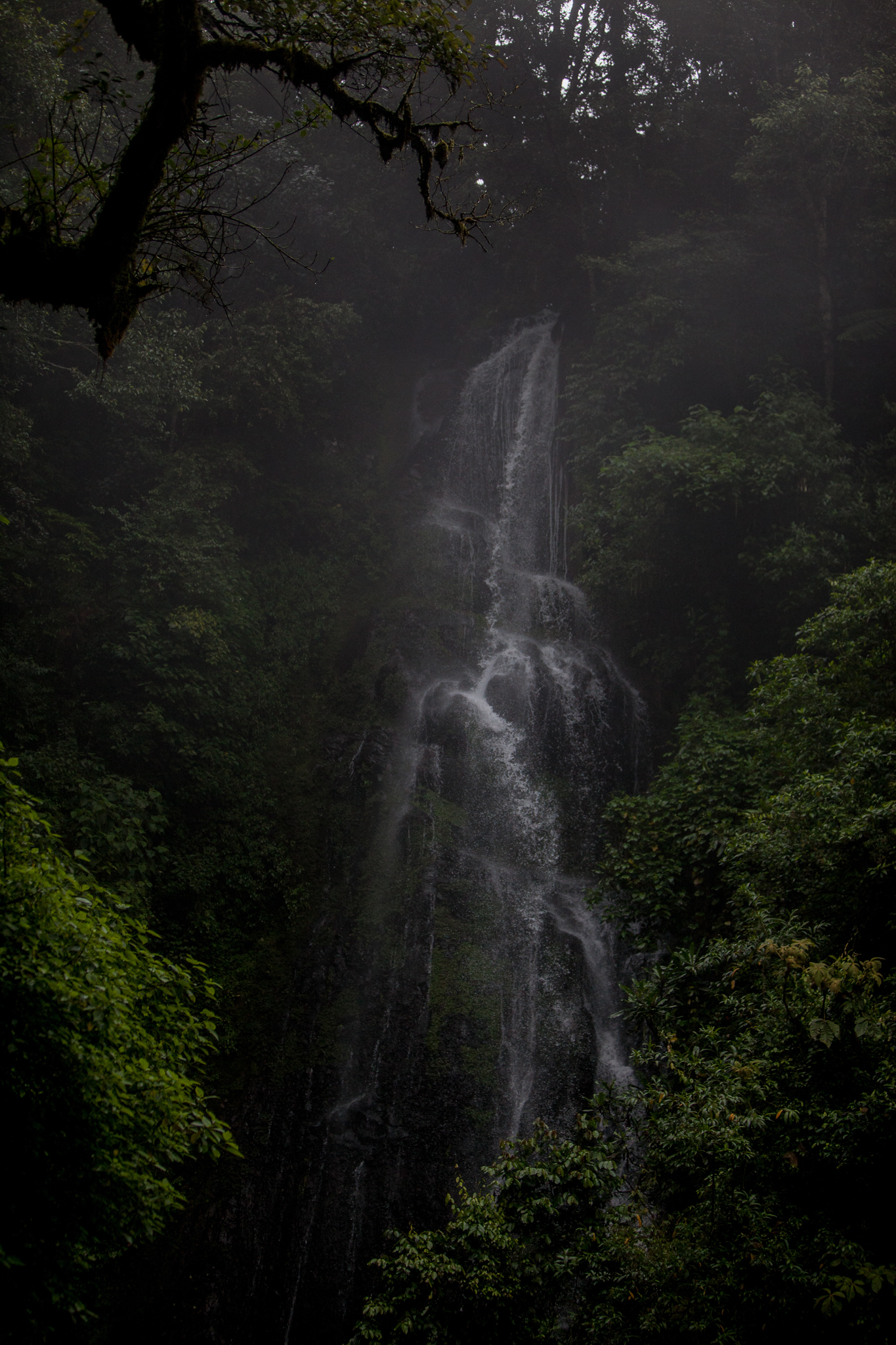 This waterfall in Veracruz, Mexico illustrates the role that cloud forests play in producing fresh water for communities downslope.