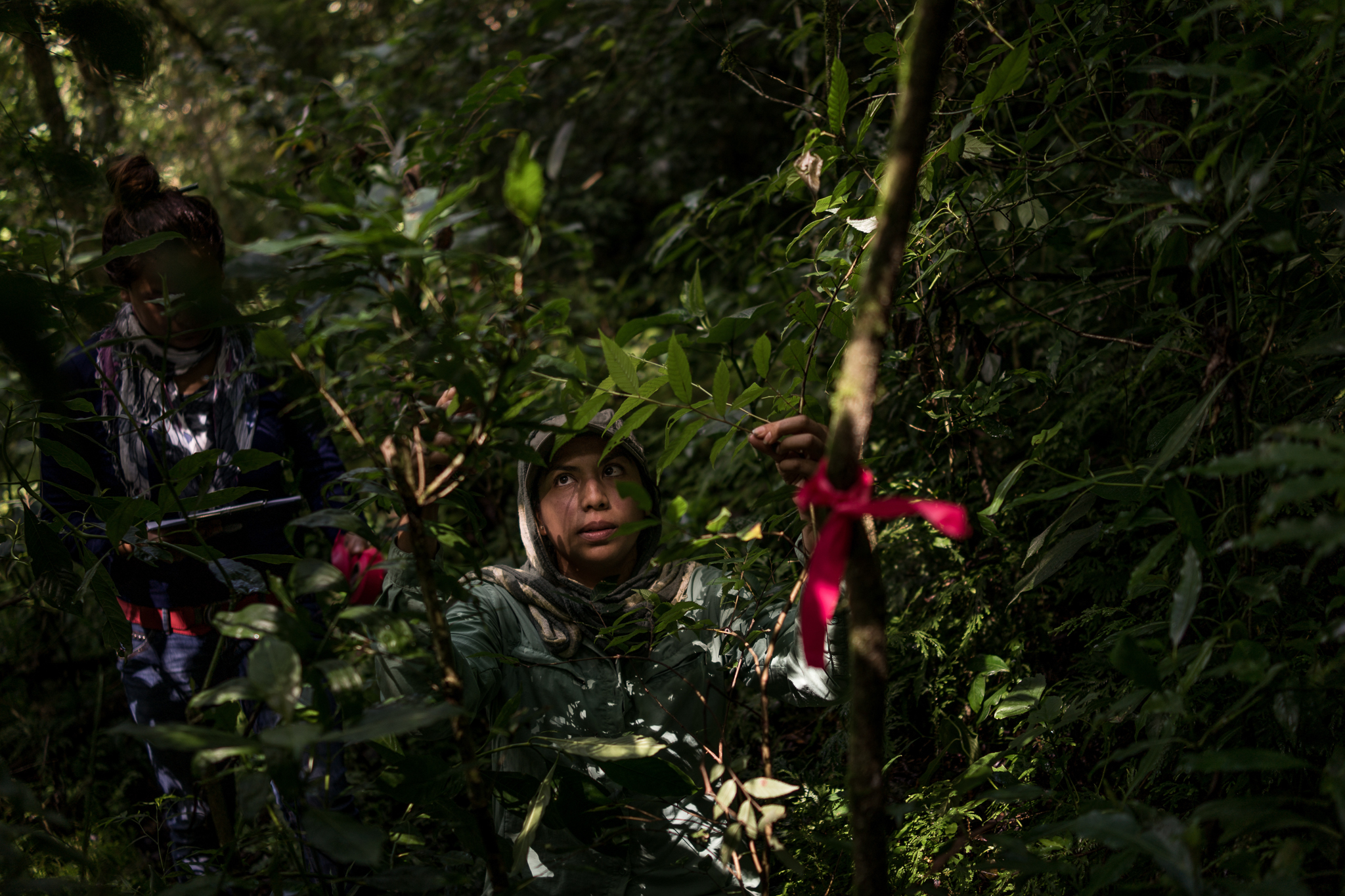 Research students from Mexico's Institute for Ecology in Xalapa, Veracruz study trees replanted in an area of cloud forest once heavily deforested.
