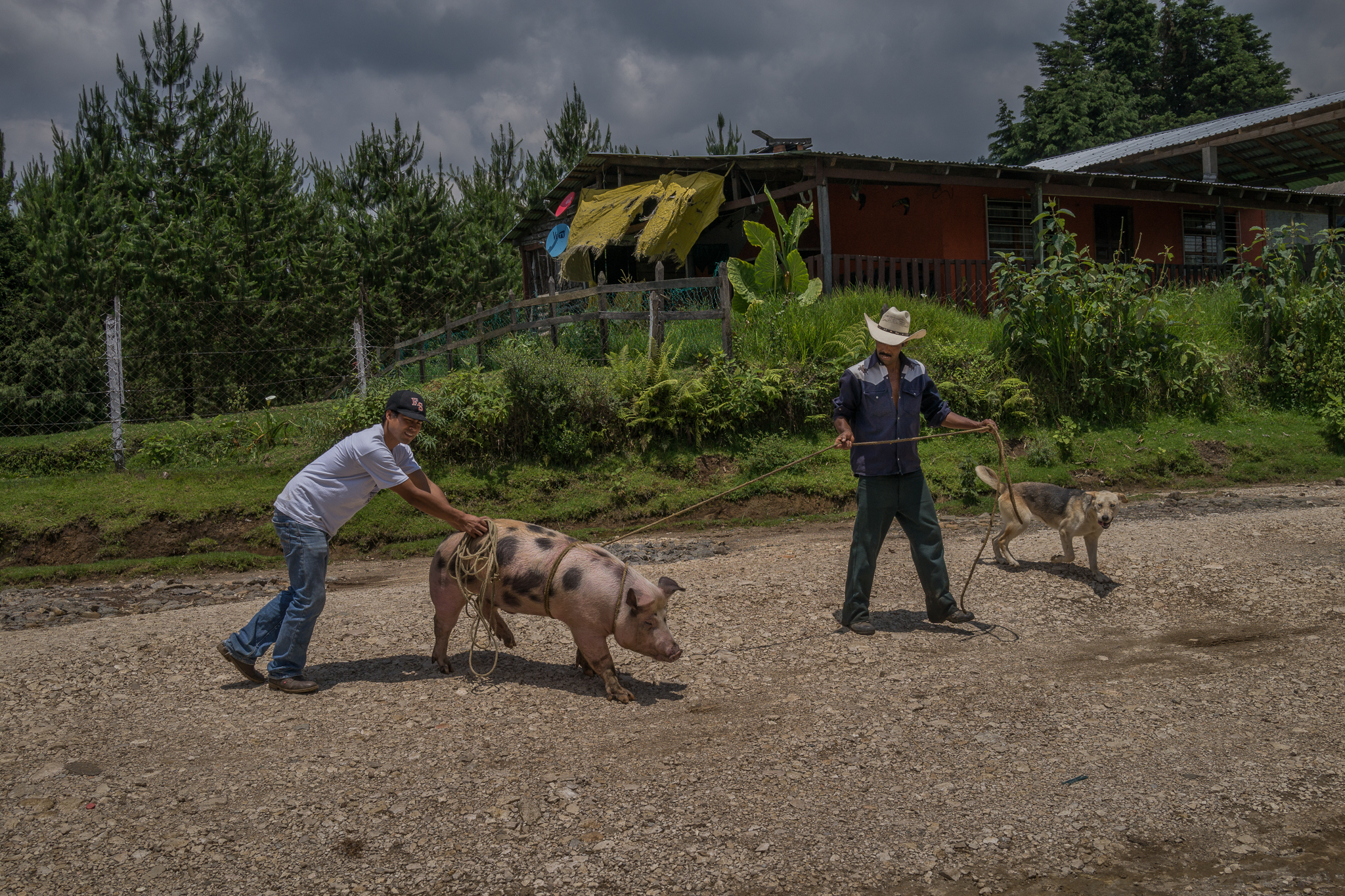 Campesinos take a pig to slaughter for a baptismal party in the town of El Zapotal, Veracruz.