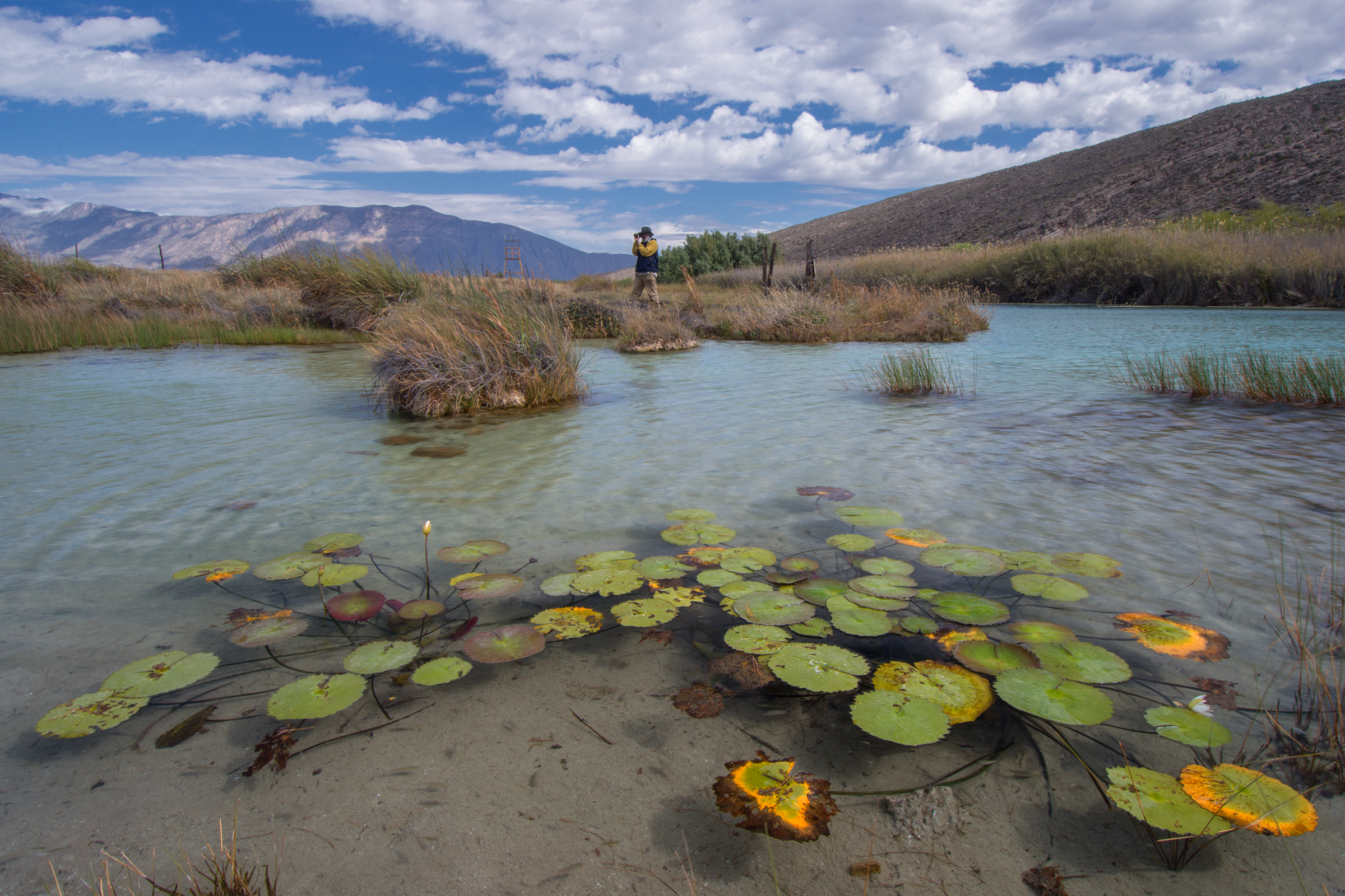 El Mojarral—a large private pond with microbial carpets—provides refuge for endemic turtles and fish.