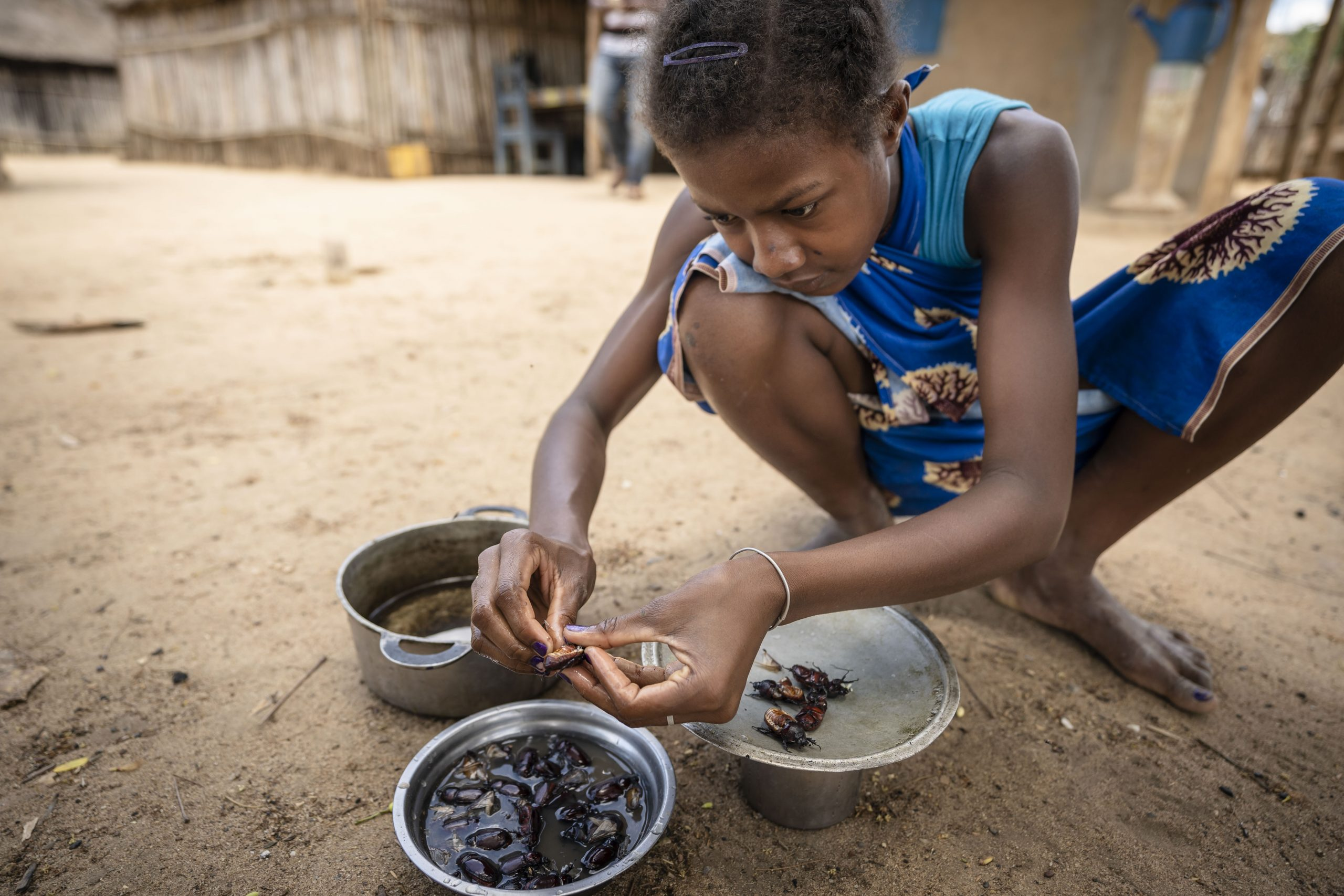 Insect farming could serve an important role in alleviating food insecurity in Madagascar, where almost half of all children under five are malnourished.