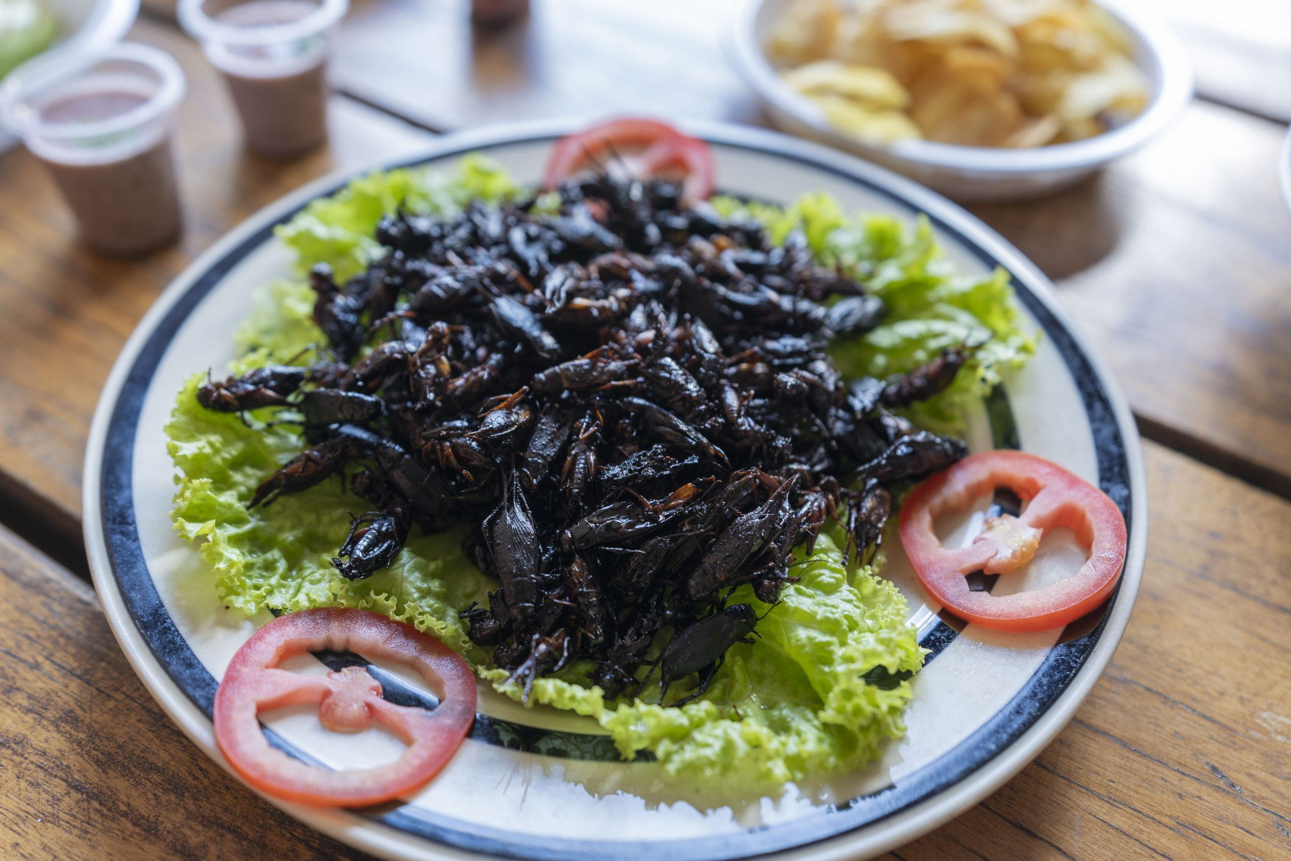 Fried cricket hors d'oeuvres are served to guests at Valala Farm. Many think the farming of protein-rich insects like crickets could be a viable way of feeding the world's ever-growing population, as well as conserving wildlife.