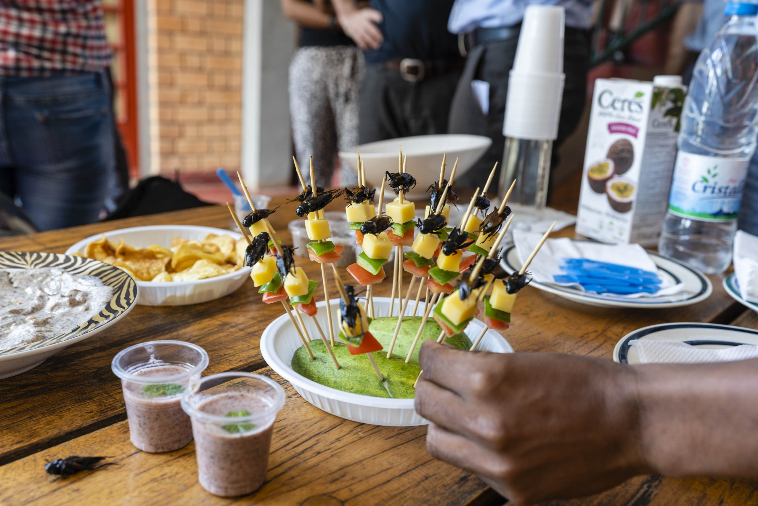 Cricket appetizers are served to guests at Valala Farm. Founder Brian Fisher hopes that Valala is the first of many cricket farms to be built in Madagascar.