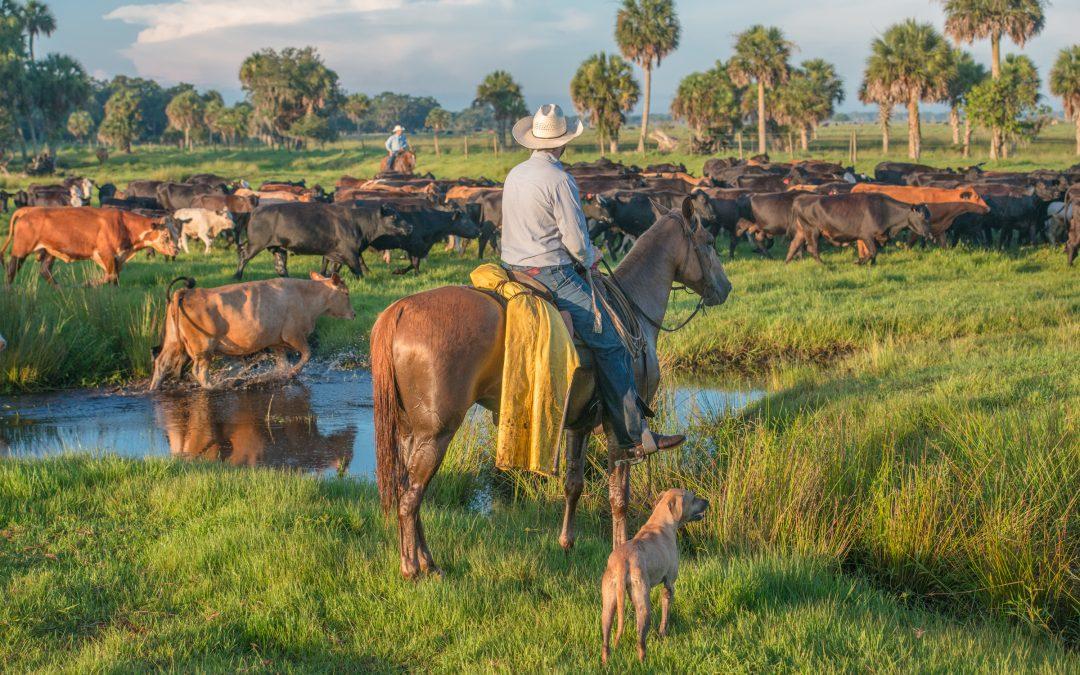 Raising nature on Florida Ranchlands
