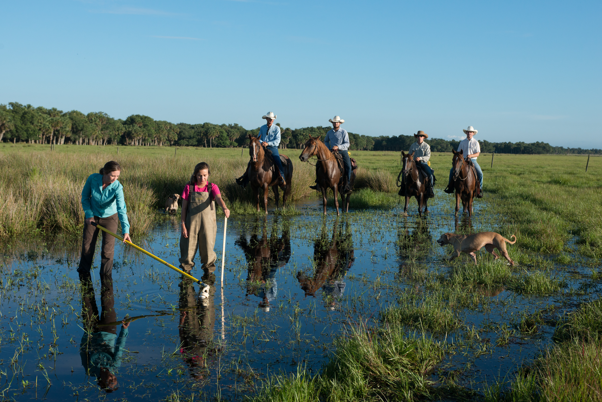 Ecologist Betsey Boughton (in blue) takes water and core samples from a wetland on Buck Island Ranch, while ranch foreman Gene Lollis and his cow crew look on.