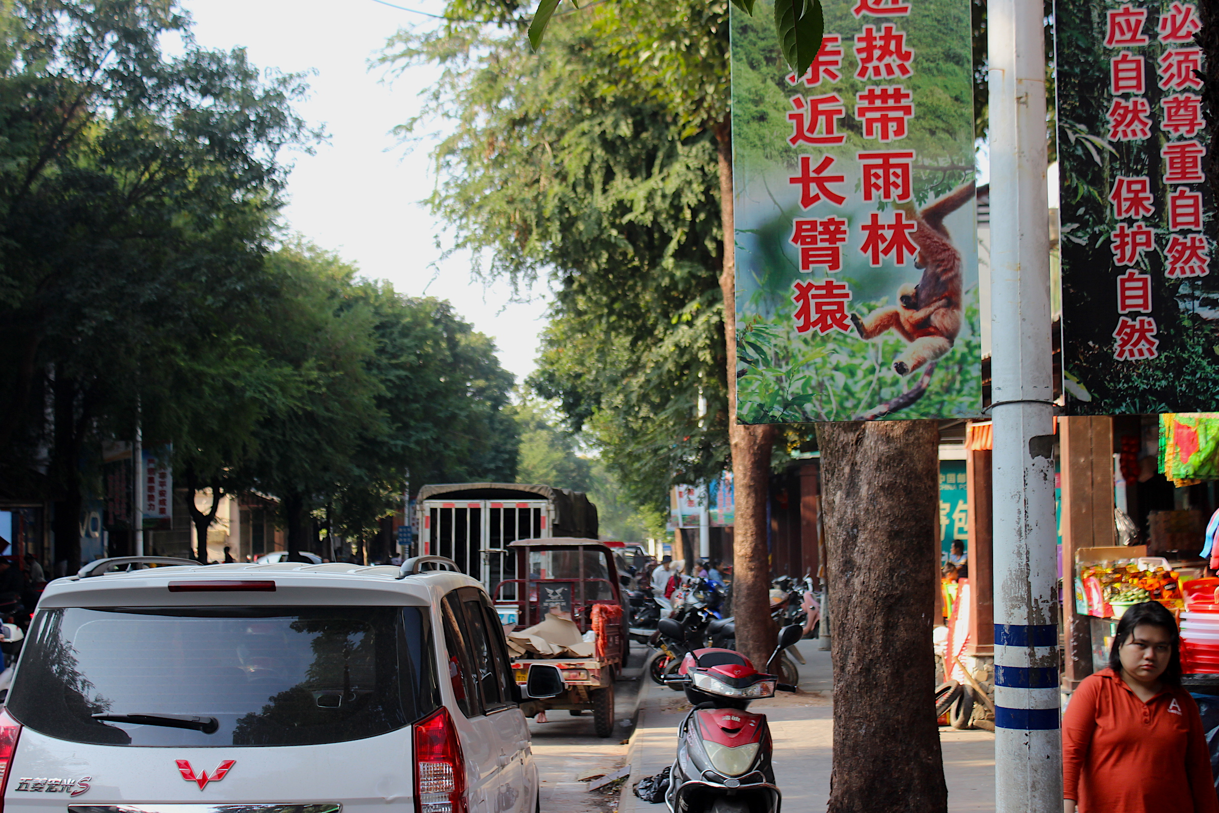 Banners in the town of Baotie, which flanks Bawangling National Nature Reserve on the west, implore people to respect and protect nature. Photograph by James Dinneen