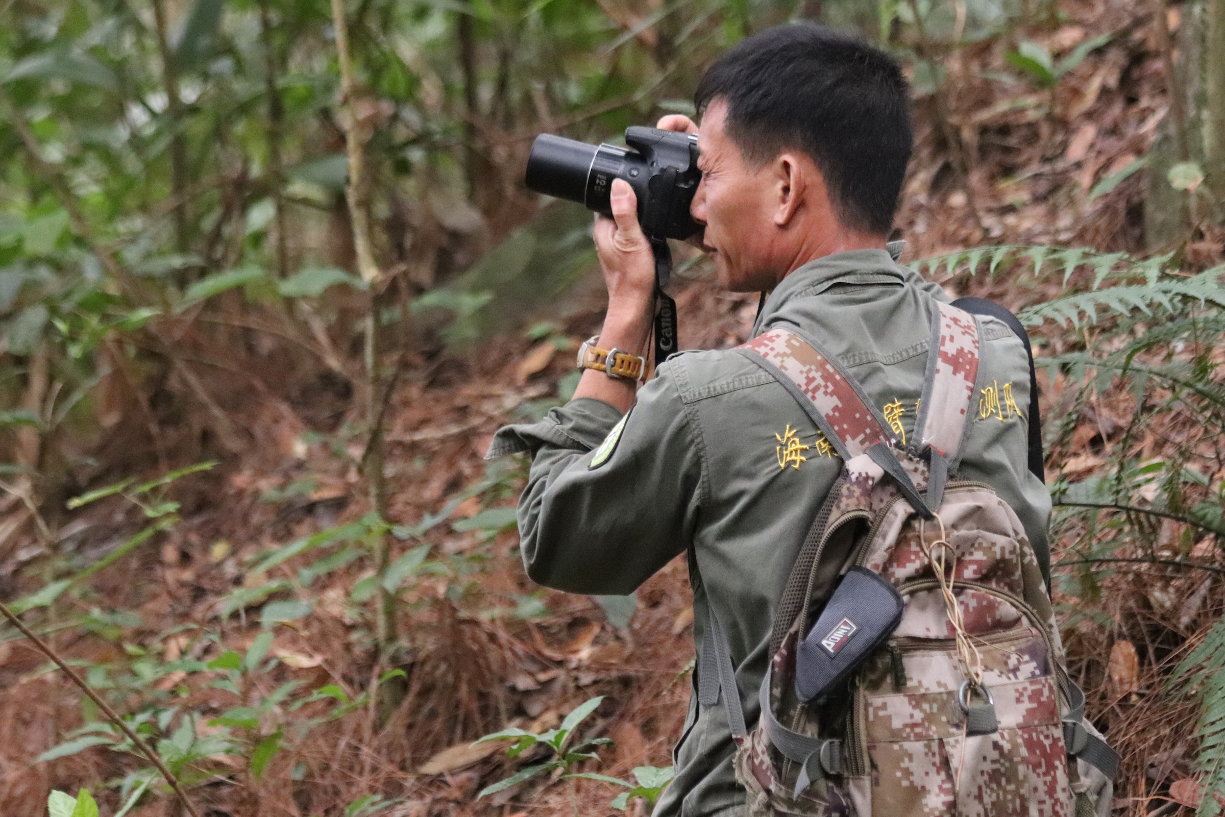 Forest ranger Li Wenyong monitors the tiny population of the Hainan gibbon, the rarest ape in the world. Photograph courtesy of Kadoorie Farm & Botanic Garden