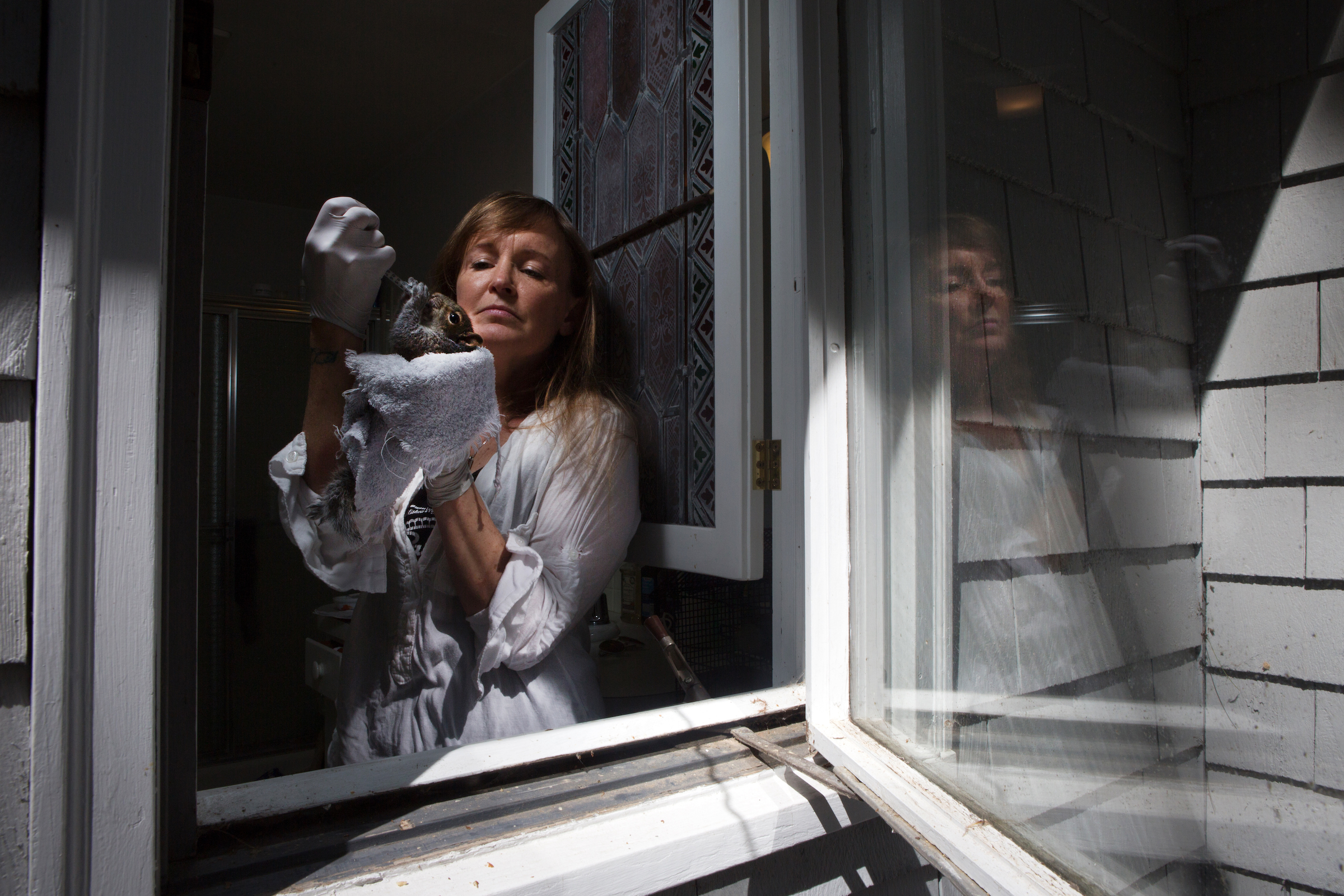 Susanna Tuffy, a licensed wildlife rehabilitator from Duxbury, Massachusetts, feeds a baby squirrel from inside her bathroom window. Tuffy cares for about 60 animals a year in her home.
