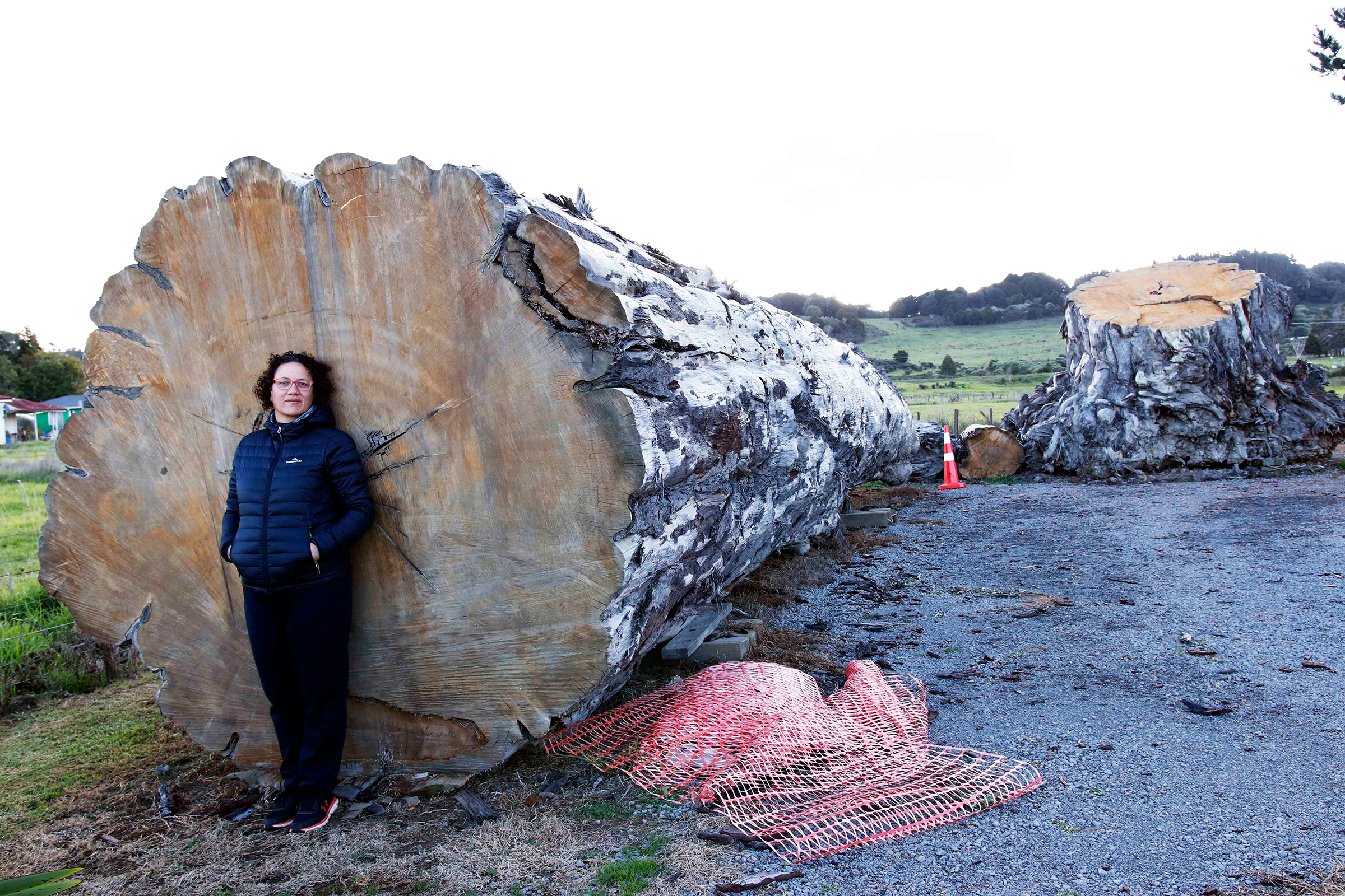 For now, the giant tree rests in three pieces in the parking lot of the Ngāwhā marae, or meeting house, in New Zealand's far north, watched over by Donna Tukariri. Photograph by Kate Evans.