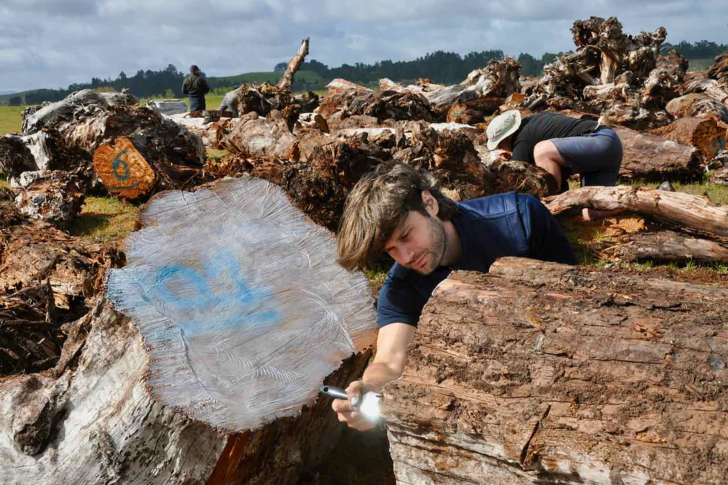 John-Mark Woolley from NIWA paints glue onto the cut faces of swamp kauri logs to preserve them from the weather. Photograph by Kate Evans.