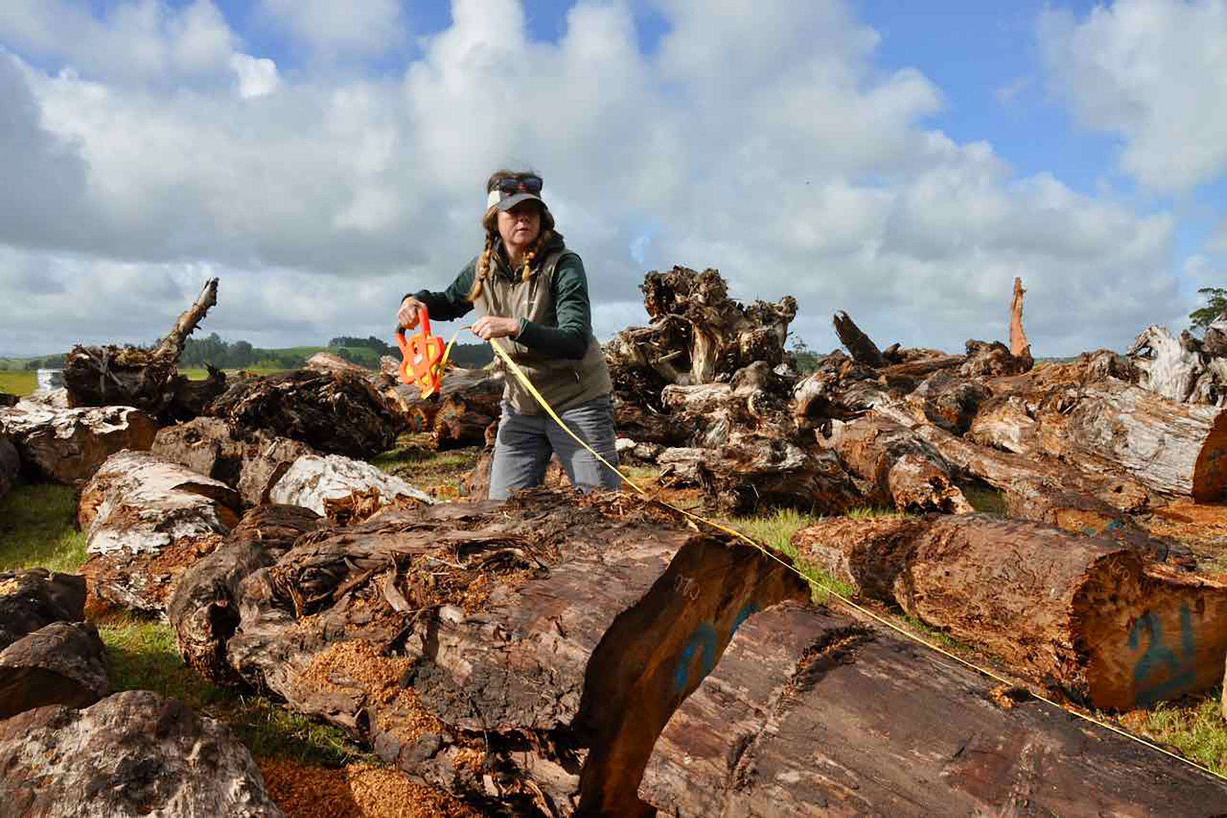 Deirdre Ryan from MARUM University of Bremen assists Drew Lorrey to measure ancient kauri logs on Northland's Karikari peninsula. Photograph by Kate Evans.