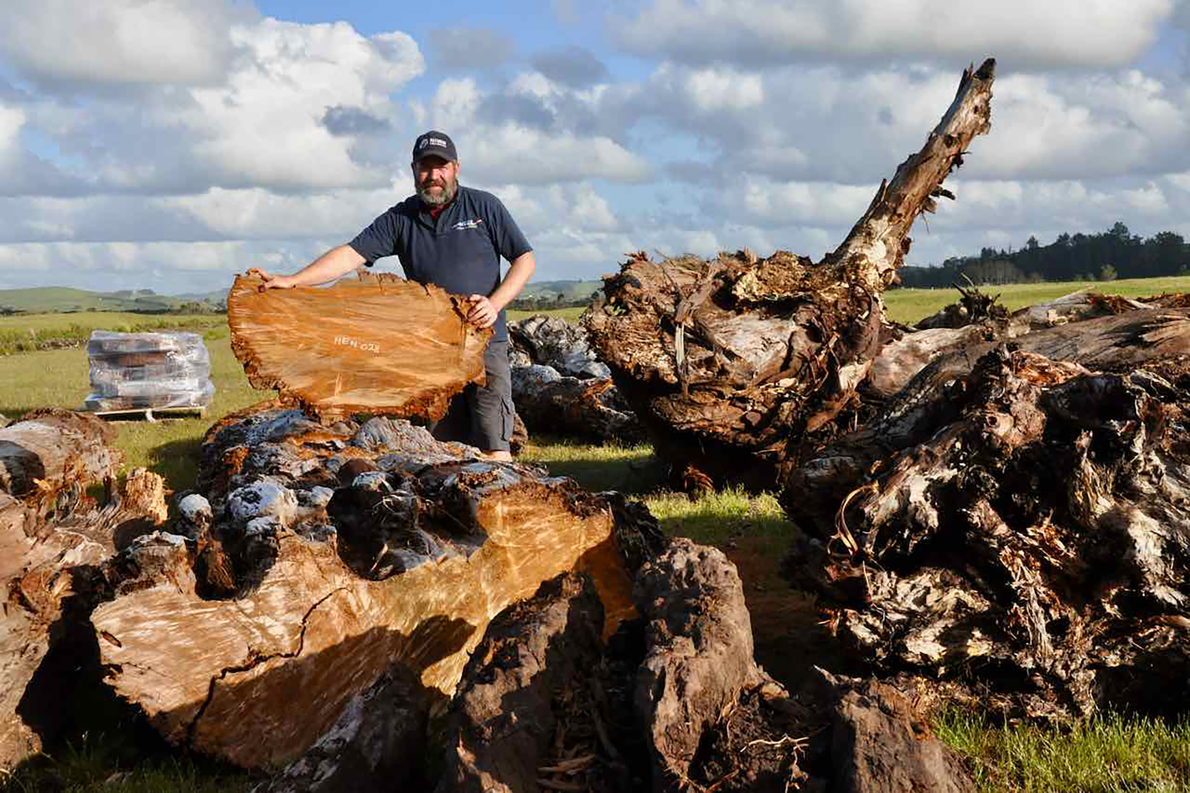 "Climate scientist Drew Lorrey from New Zealand's National Institute of Water and Atmospheric Science (NIWA) with a kauri ""biscuit"" cut from a log, showing the annual rings. Photograph by Kate Evans."