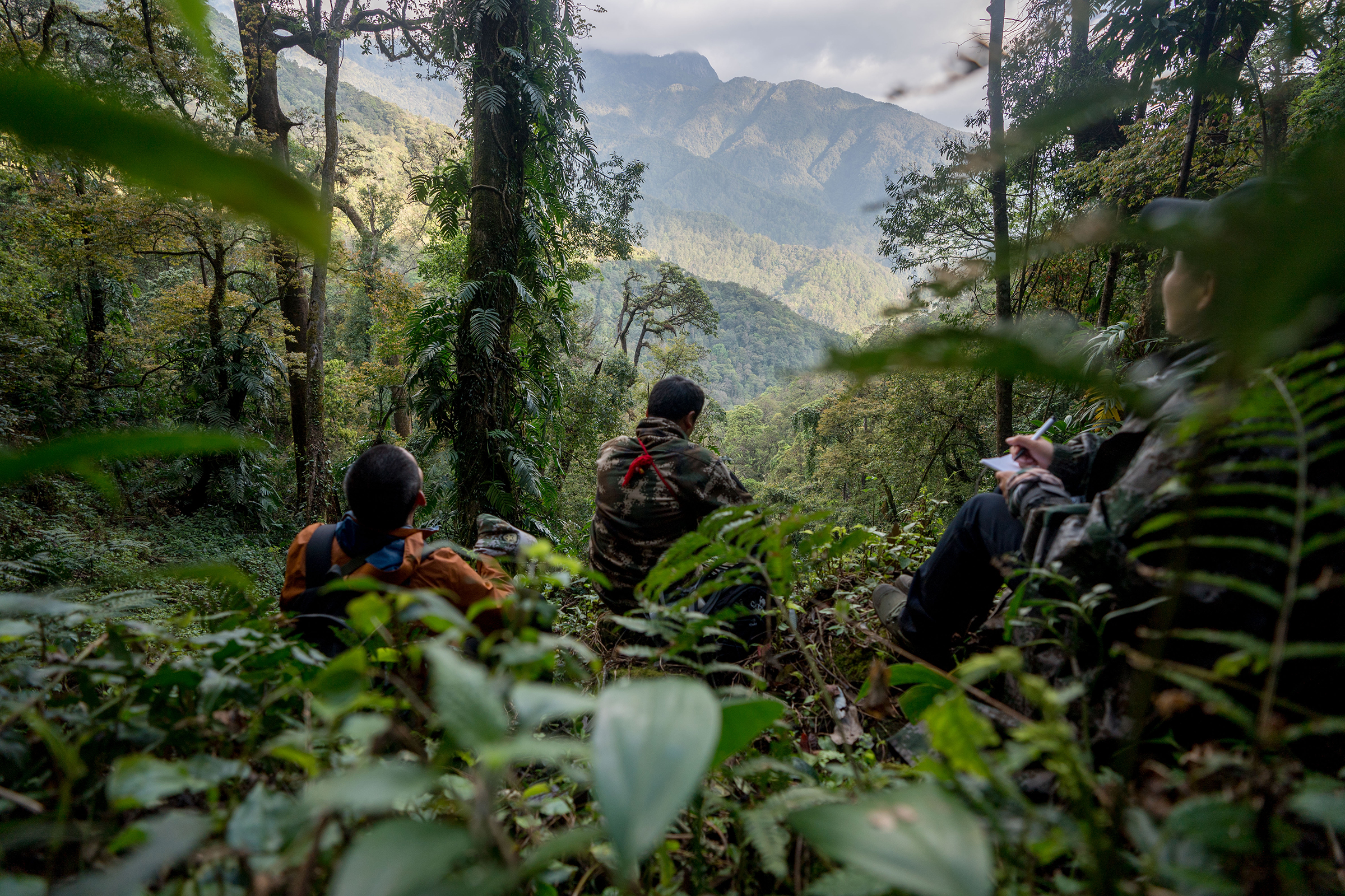 When the gibbons stop to eat or rest, the rangers do as well. Rangers follow the gibbons' movements across the mountain ridges streams from the pre-dawn hours when the animals wake up until late afternoon when they bed down for the night.