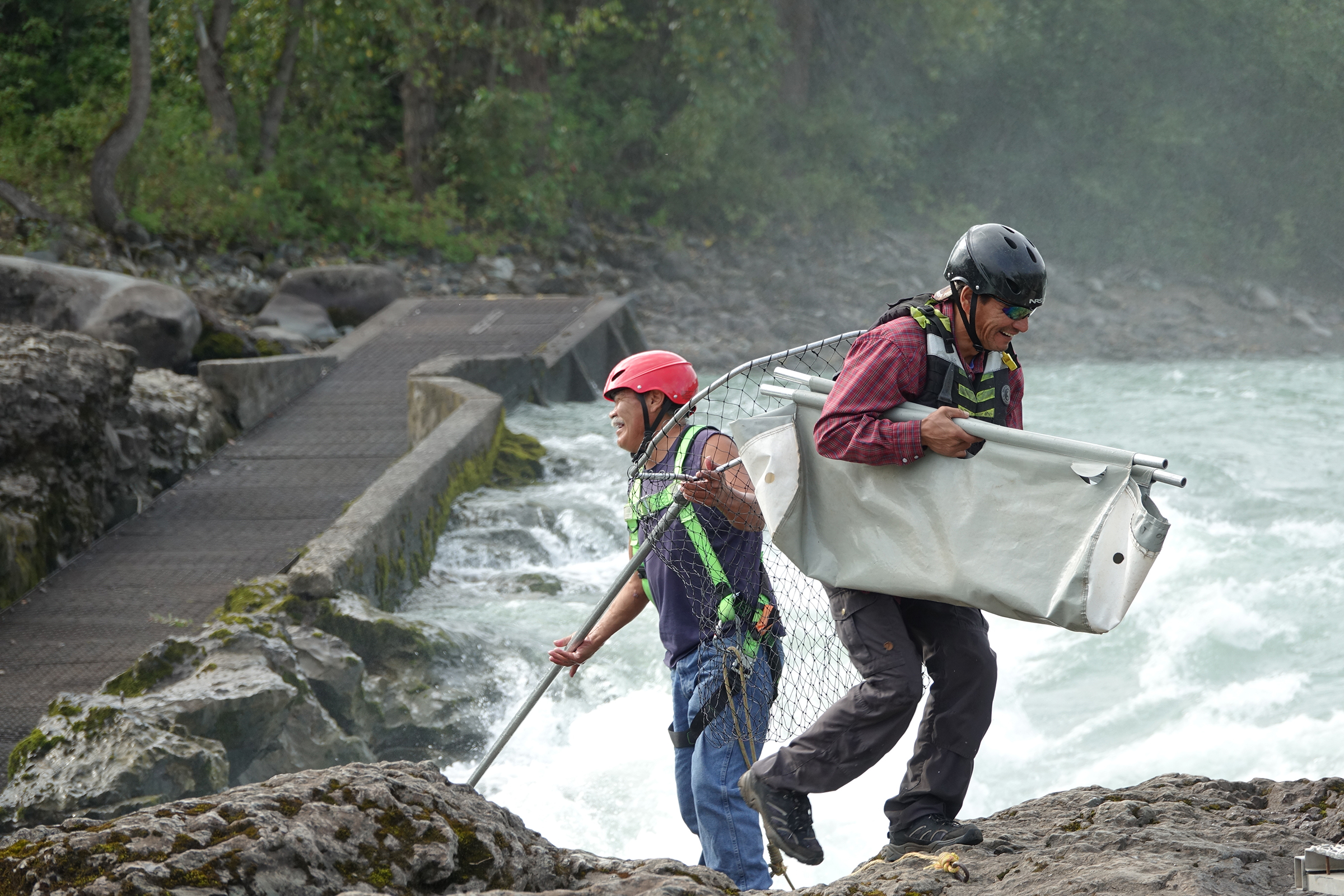 Wet'suwet'en First Nations fishermen Willie Pete (left) and Fabian Alfred (right) smile following the capture of a salmon at Witset canyon on the Bulkley River, a tributary of the Skeena River in Northern British Columbia. Traditional capture from rocks beside the rapids requires agility and skill to net salmon mid-leap. This salmon is being carried in a cradle to a research table where it will be measured, weighed, tagged, and then released into the waters above the rapids. Photograph by Lesley Evans Ogden