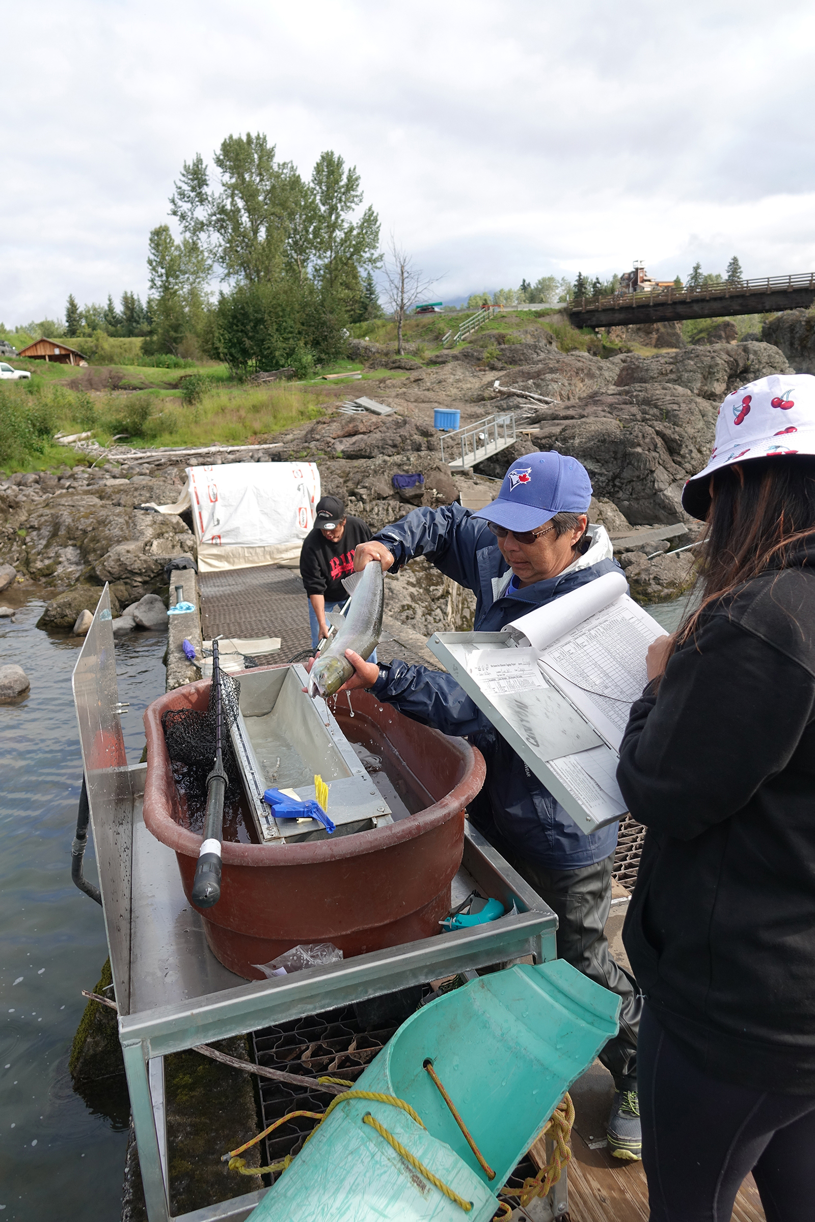 Yolanda Alfred (left) and assistant Mackenzie Michell (right) are measuring and weighing a recently captured sockeye salmon at Witset Canyon on the Bulkley River, a tributary that feeds the Skeena River. Half of the sockeye captured here by Wet'suwet'en First Nations traditional fishers will be kept for food, and the other half tagged, measured, weighed, and released to continue their journey upriver to spawn. Photograph by Lesley Evans Ogden
