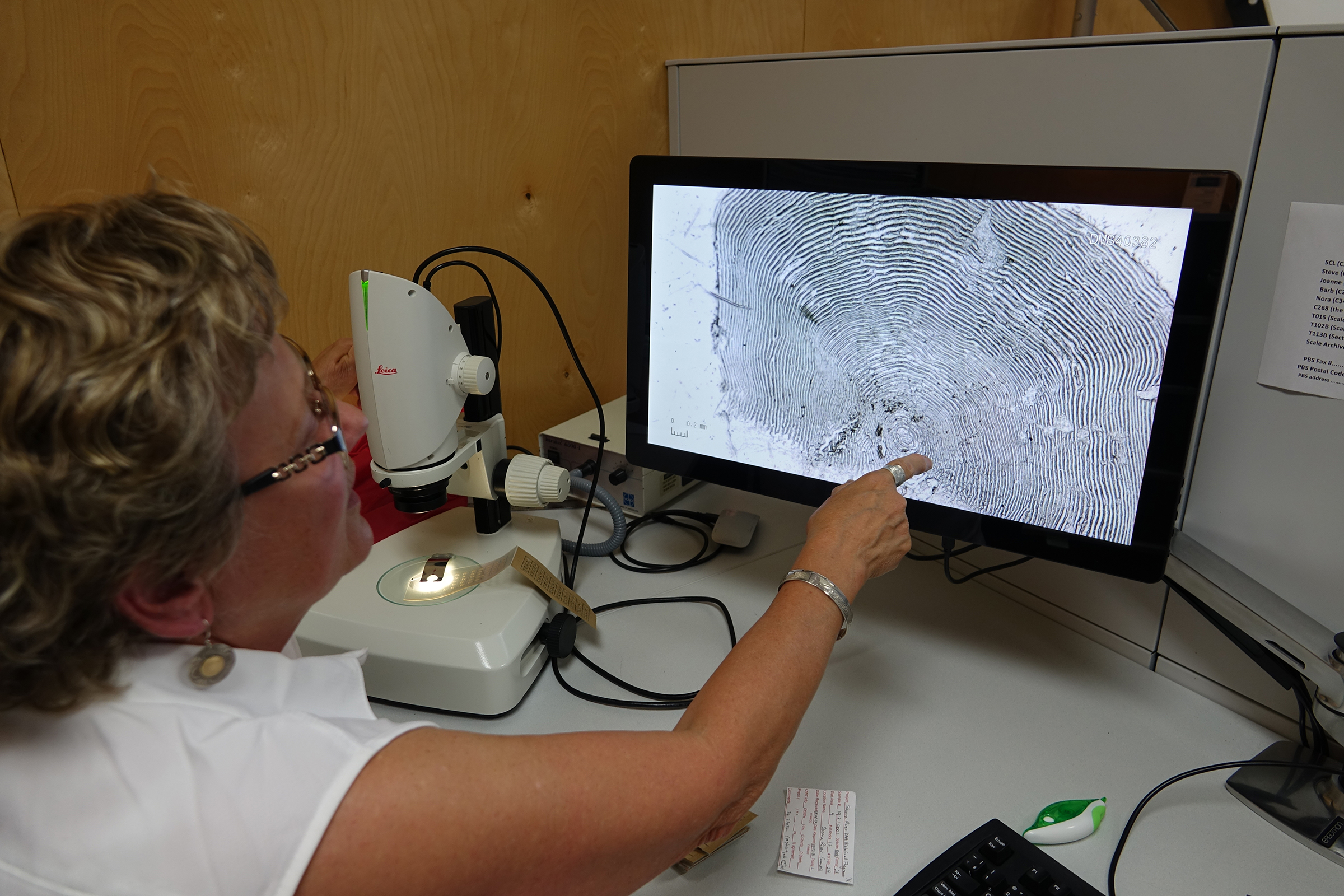 At the DFO Pacific Biological Station in Nanaimo, on Vancouver Island, in May 2019, Darlene Gillespie points to a projected image of a sockeye salmon scale under a microscope. Each scale, says Gillespie, is a little treasure trove of information. Photograph by Lesley Evans Ogden