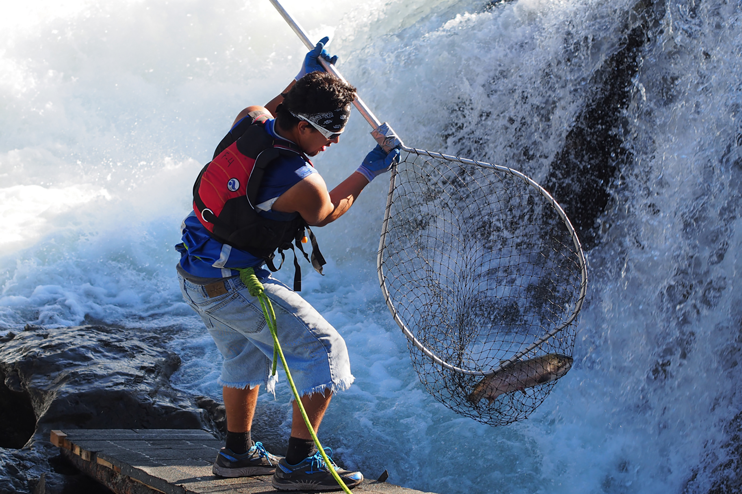 Brandon Pete uses a traditional First Nations capture method to net a salmon in mid-air as it leaps up the rapids during its migration up the Skeena River in Northern British Columbia. Photograph by Walter Joseph