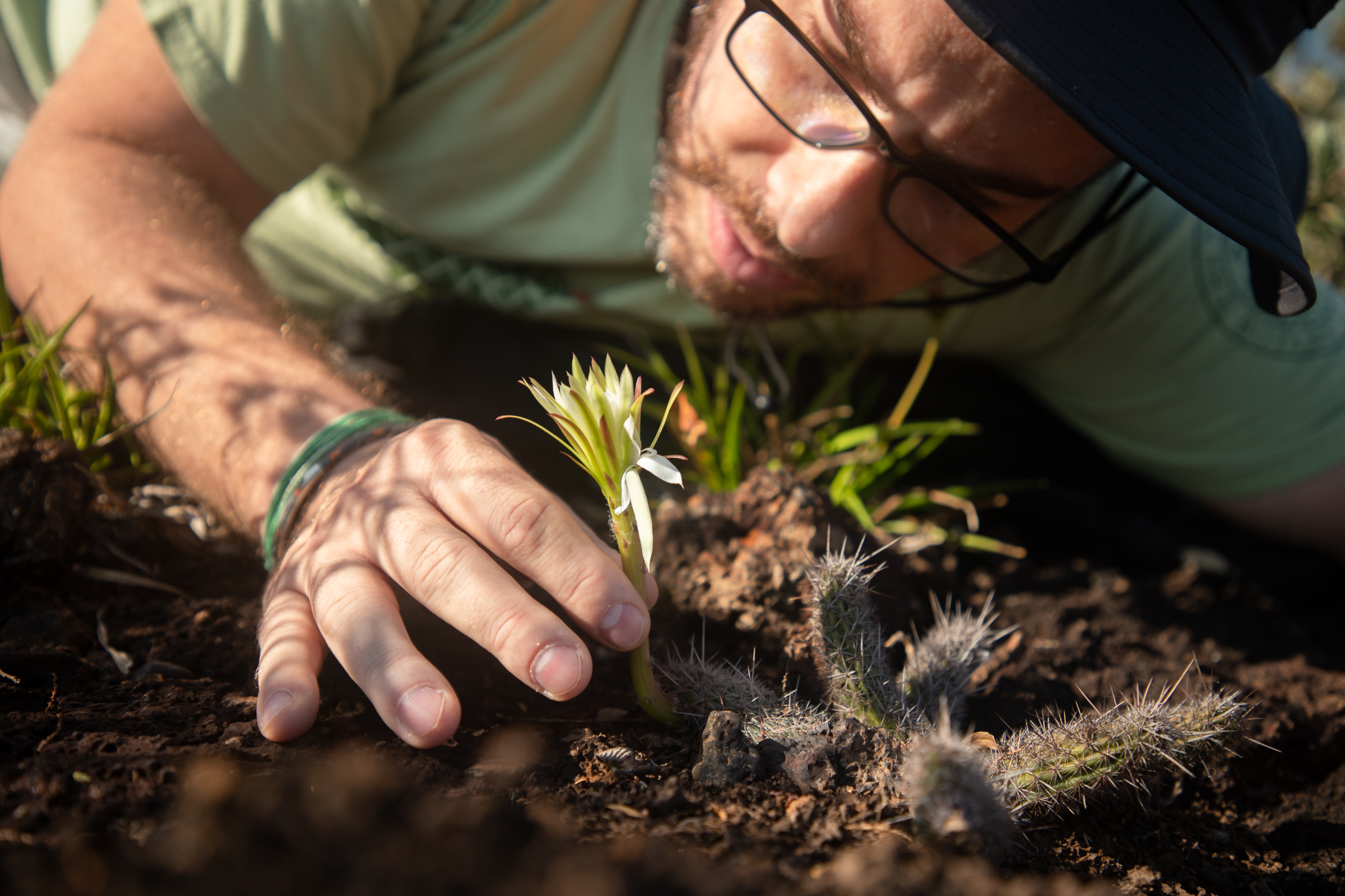 Fernando Silveira, professor and researcher at the Federal University of Minas Gerais, examines a rare specimen of Arthrocereus glaziovii, a critically endangered cactus species endemic to the Campos Rupestres of Quadrilátero Ferrífero region. For years, Silveira has studied the plant diversity of the Campos Rupestres and its responses to anthropic disturbance, such as habitat loss, fragmentation, biological invasions and climate change.