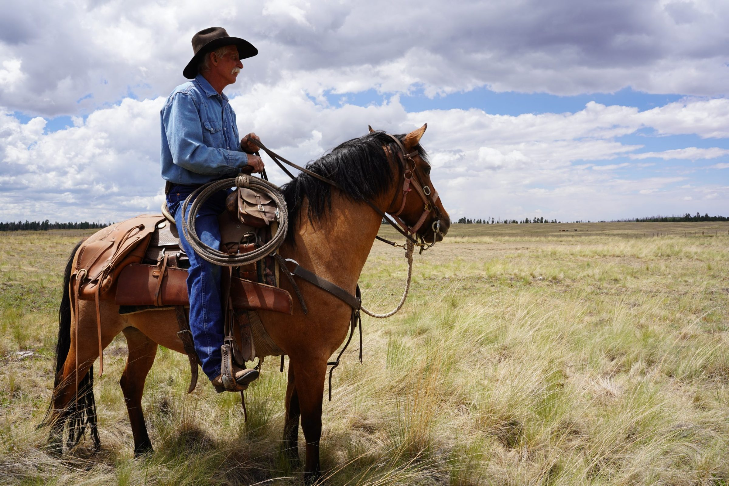 Range rider Jay Brad Miller surveys a cattle pasture in southeastern Arizona in July 2020. As Mexican wolf numbers have grown, ranchers have employed scouts like Miller to keep cattle and wolves apart. Photograph by April Reese