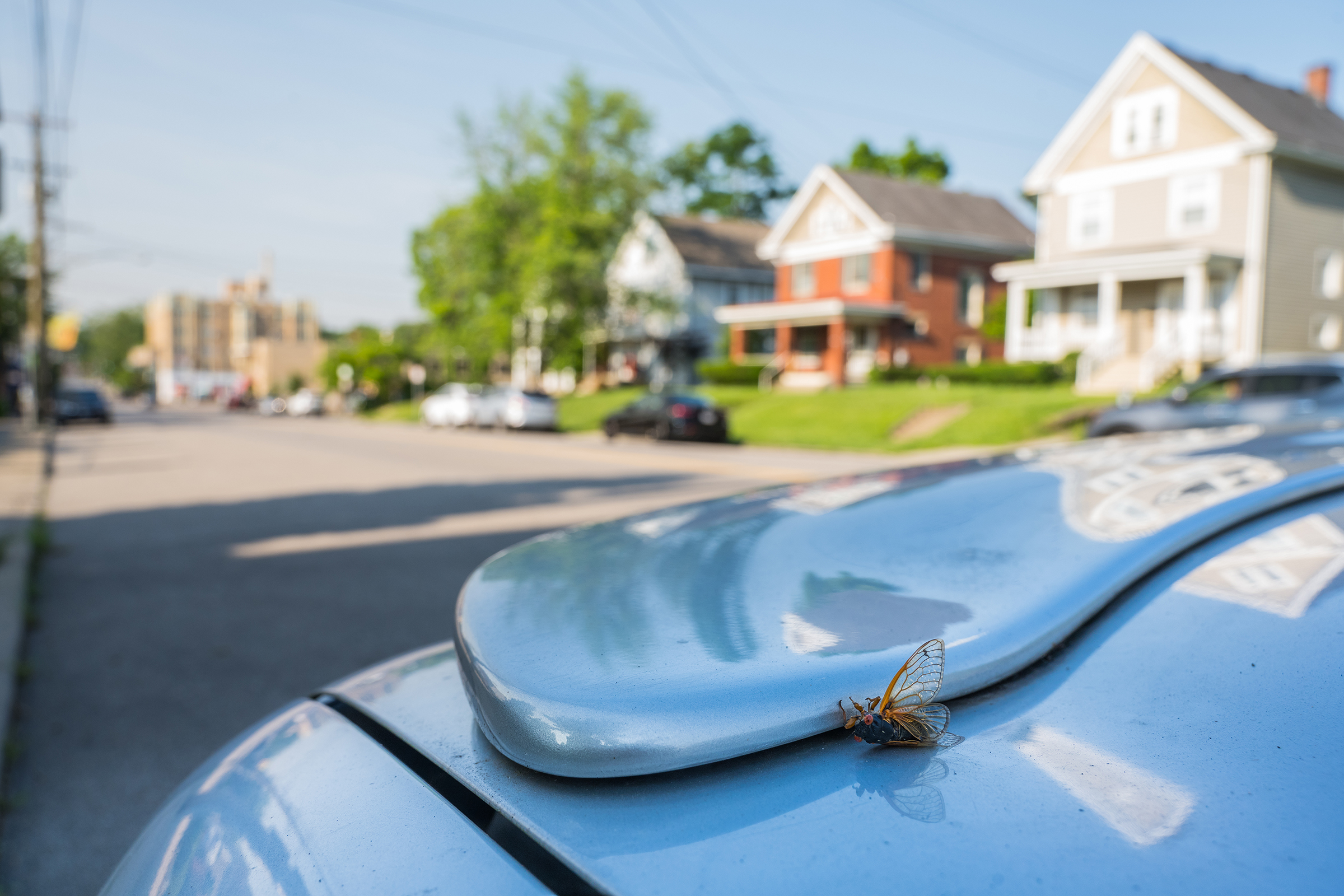 Cicadas are almost impossible to avoid during the summer of 2021 in the Ohio River Valley.